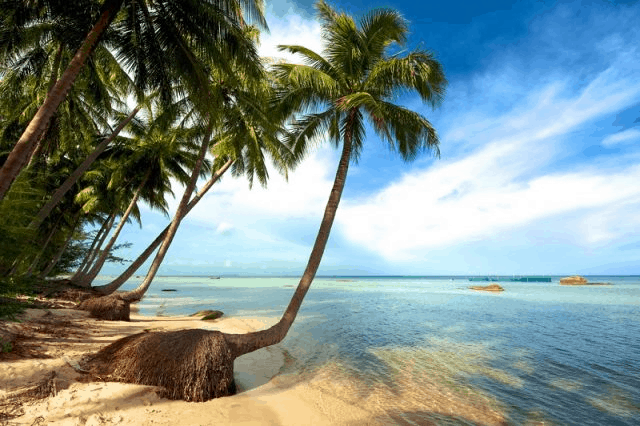 Bai Sao Beach Phu Quoc: Detailed review | The most beautiful beach in Phu Quoc